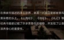 林彩娟:千年野生崖柏做的线香,点燃时,心静了